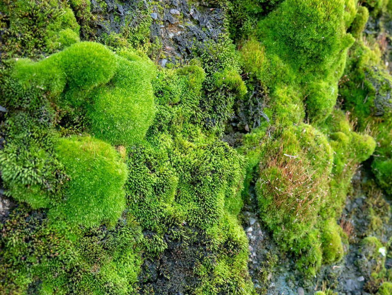 1598px-04-1233-moss-1-1280x961.jpg